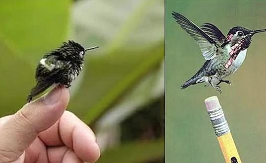 mini humming birds