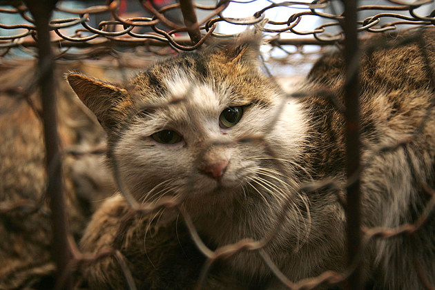 Rescued Stray Cats Wait To Be Adopted
